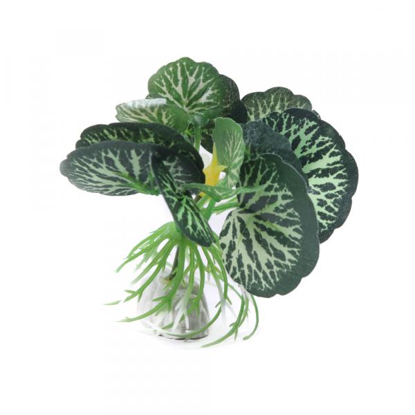 Planta Seda 4 Sp01